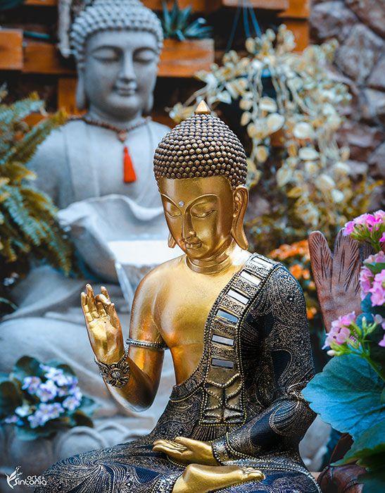 Estátua Buda Vitarka Mudra 42cm