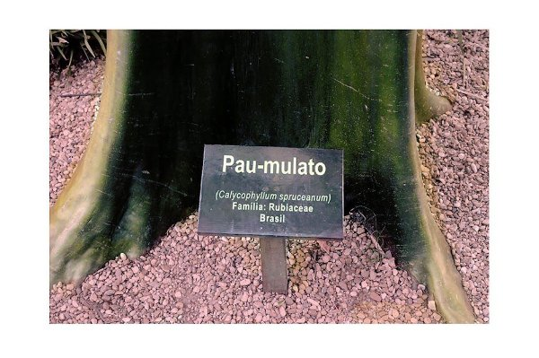 Neyde Lantyer - Pau-Mulato