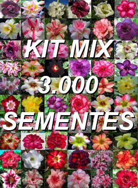 Kit com 3.000 sementes de cores de flor simples da Rosa do Deserto