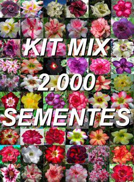 Kit com 2.000 sementes de cores de flor simples da Rosa do Deserto