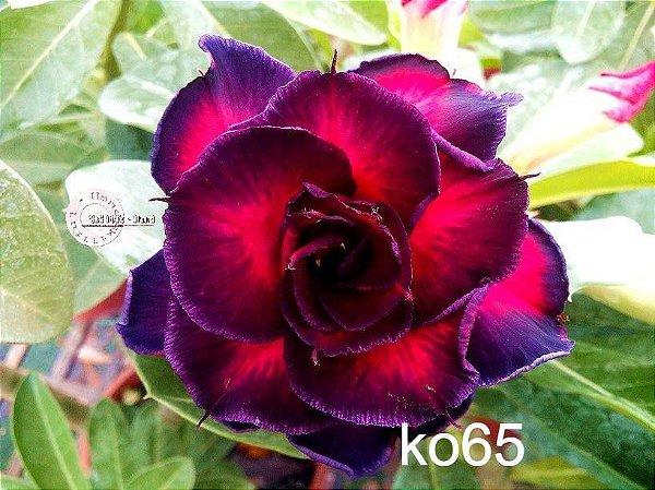 MIX flores simples, dobradas e triplas - Kit com 10 sementes - Mr. Ko