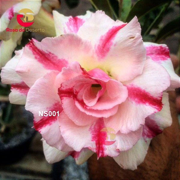 Enxerto de uma cor com flor Tripla - NS001