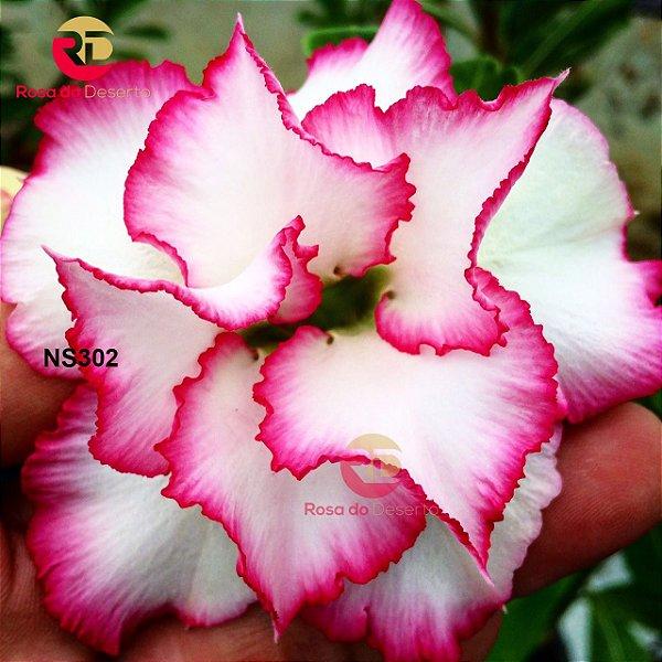 Enxerto de uma cor com flor Dobrada - NS302