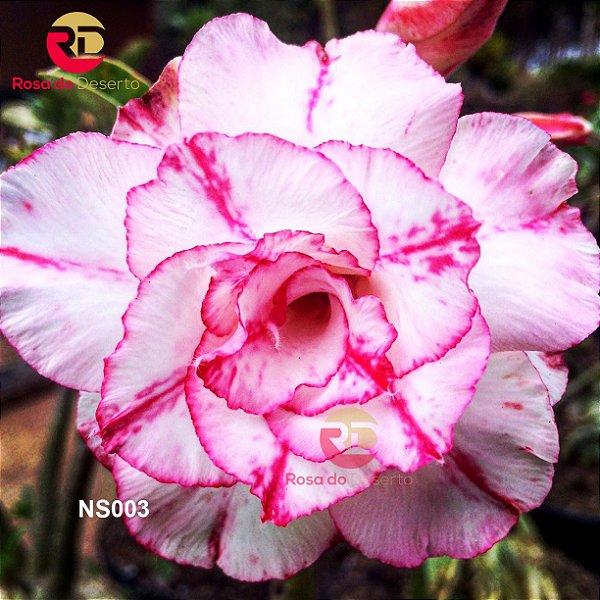 Enxerto de uma cor com flor Tripla - NS003