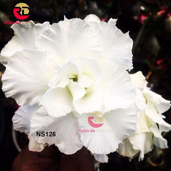 Enxerto de uma cor com flor Tripla - NS126