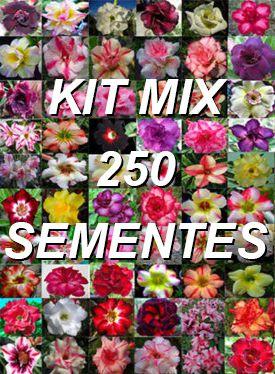 Kit com 250 sementes de cores de flor simples, dobradas e triplas da Rosa do Deserto