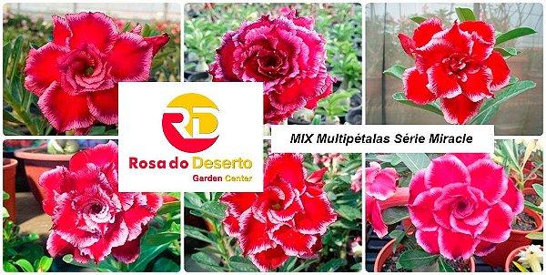 MIX com 50 sementes de flores dobradas e triplas - Série Miracle - Rinoa Chen