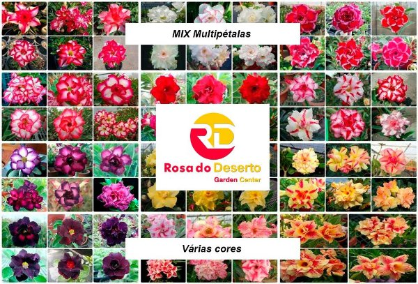 MIX com 5 sementes de flores simples, dobradas e triplas - Rinoa Chen