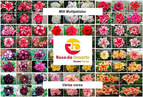 MIX com 50 sementes de flores dobradas e triplas - Rinoa Chen