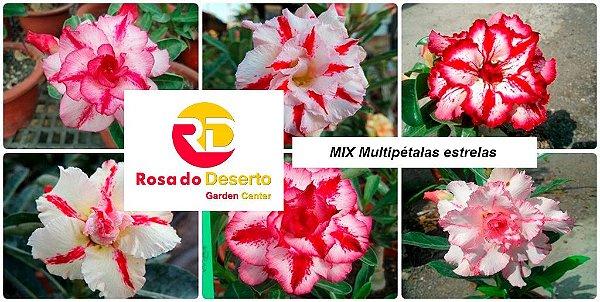 MIX com 5 sementes de flores dobradas e triplas estrelas - Rinoa Chen