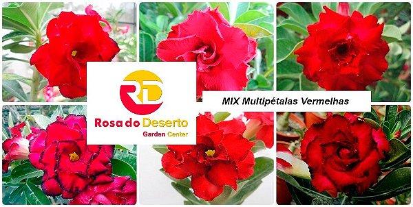 MIX com 5 sementes de flores dobradas e triplas vermelhas- Rinoa Chen