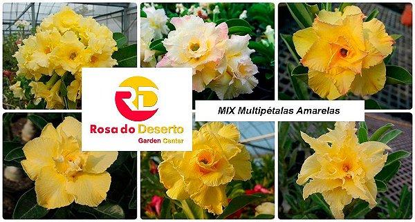 MIX com 30 sementes de flores dobradas e triplas amarelas - Rinoa Chen