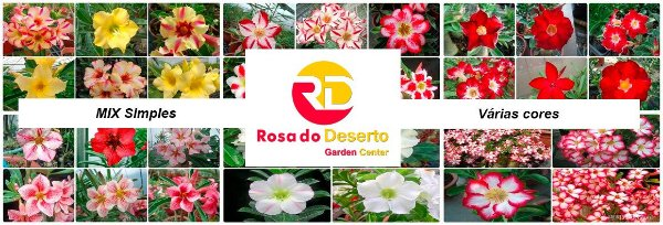 MIX com 30 sementes de flores simples varias cores - Rinoa Chen