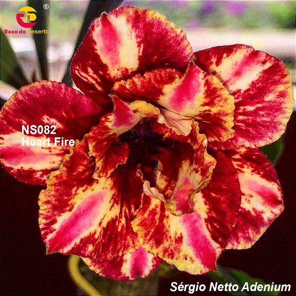 Enxerto de uma cor com flor dobrada - NS082 (Heart Fire) - Importada