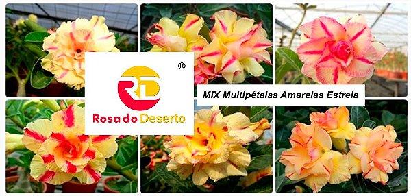 MIX com 30 sementes de flores dobradas e triplas amarelas estrela - Rinoa Chen