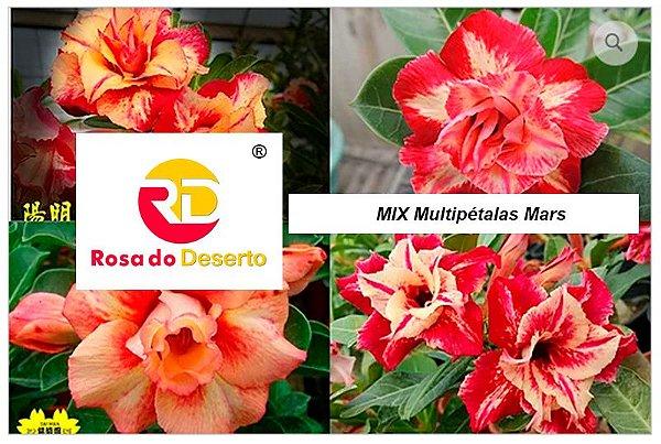 MIX com 5 sementes de flores dobradas e triplas amarelas mars - Rinoa Chen