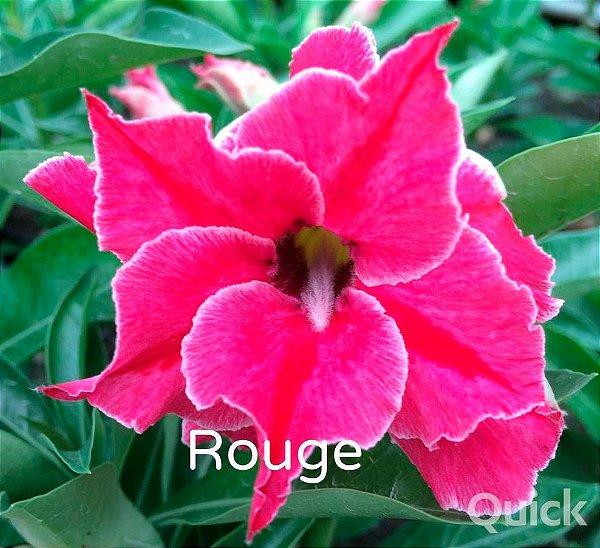 Enxerto de uma cor com flor dobrada - Rouge - Nacional