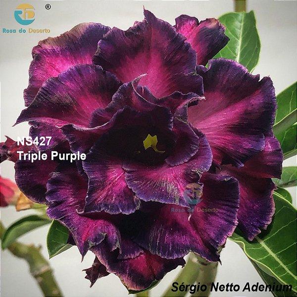 Enxerto de uma cor com flor tripla - NS427 (Triple Purple) - Importada