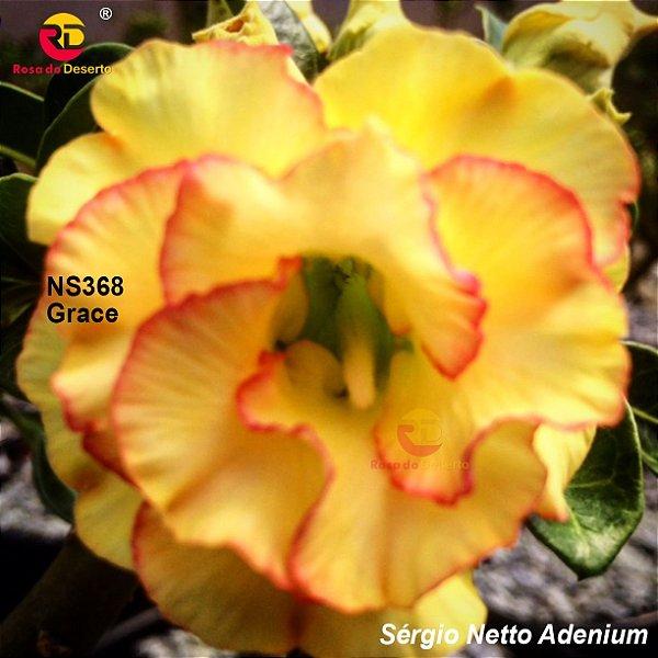Enxerto de uma cor com flor dobrada - NS368 (Grace) - Importada