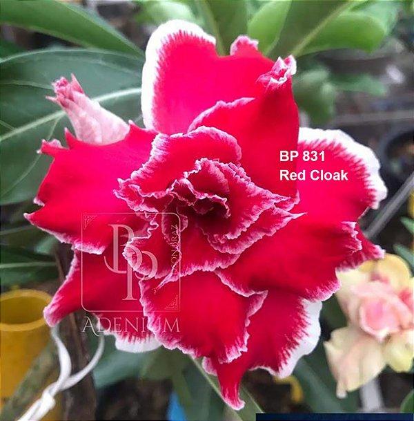 Enxerto de uma cor com flor tripla BP 831 (Red Cloak) - Importada