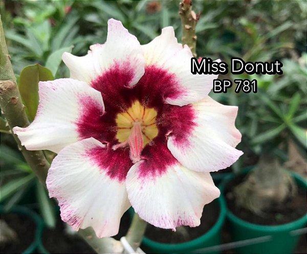 Enxerto de uma cor com flor simples BP 781 (Miss Donut) - Importada