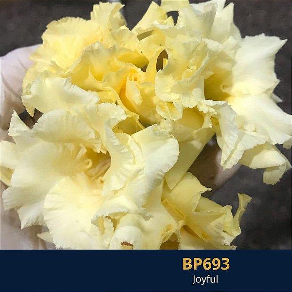 Enxerto de uma cor com flor dobrada BP 693 Joyful - Importada