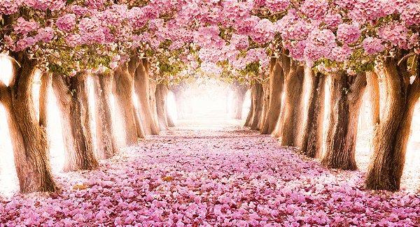 Painel de Festa 3d Cerejeiras Encantadas