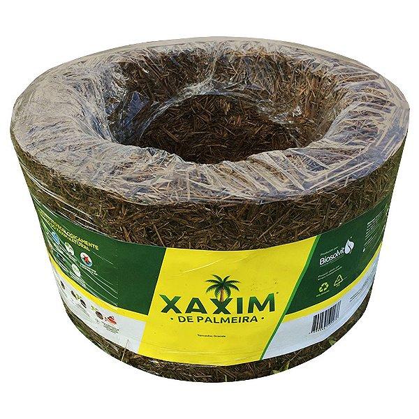 Xaxim de Palmeira - Tamanho médio (Unidade)