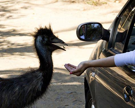 Zoo Safari: Visitando a bicharada beemmm de pertinho! (SÃO PAULO)