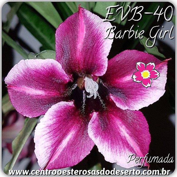 Rosa do Deserto Enxerto - Barbie Girl - Perfumada