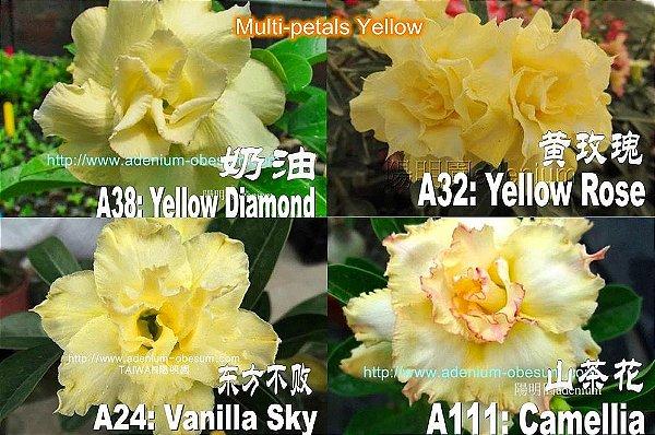Semente Multi-petals AMARELO mixed - Kit com 5 sementes