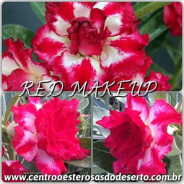 Rosa do Deserto Muda de Enxerto - Red Makeup - Flor Tripla