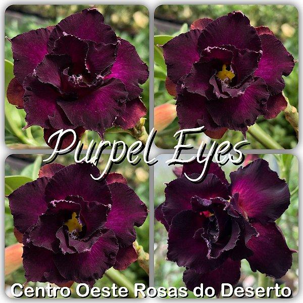 Rosa do Deserto Muda de Enxerto - Purple Eyes - Flor Dobrada