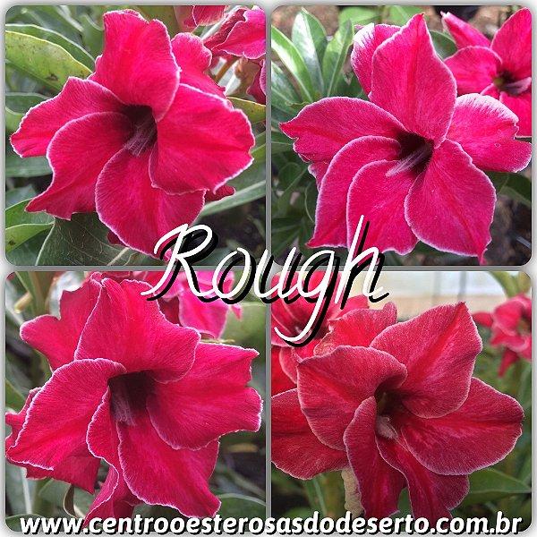 Rosa do Deserto Muda de Enxerto - Rough - Flor Dobrada