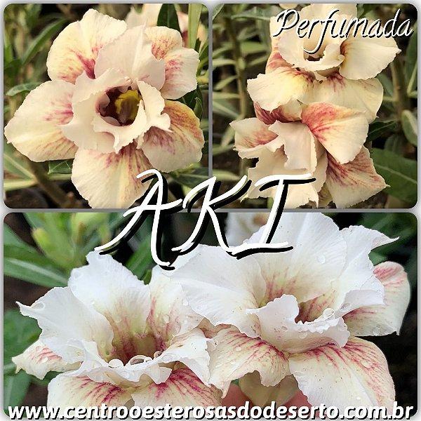 Rosa do Deserto Enxerto - AKI - Perfumada