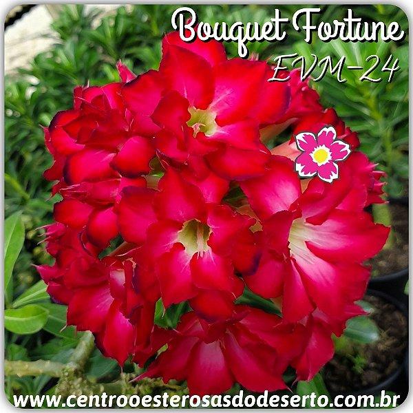 Rosa do Deserto Muda de Enxerto - EVM-024 - Bouquet Fortune - Flor Dobrada