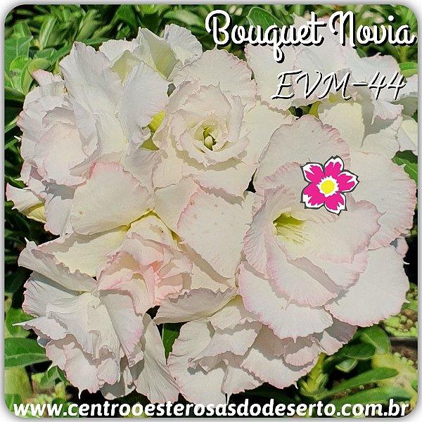 Rosa do Deserto Muda de Enxerto - EVM-044 - BOUQUET NOVIA - Flor Dobrada