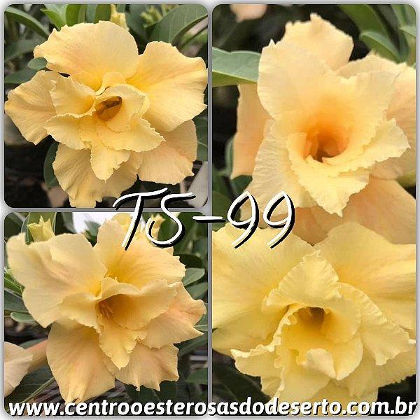 Rosa do Deserto Muda de Enxerto - TS-099 - Flor Dobrada
