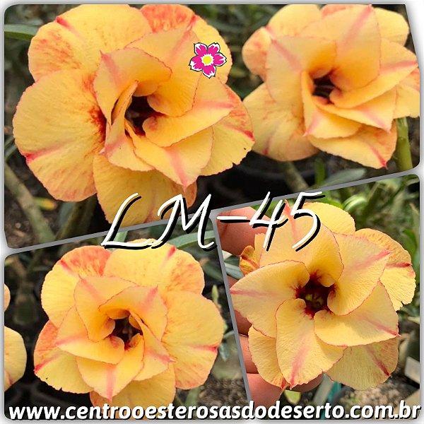 Rosa do Deserto Muda de Enxerto - LM-45 - Flor Dobrada