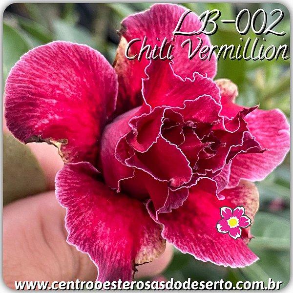 Rosa do Deserto Muda de Enxerto - LB-002 - Flor Tripla