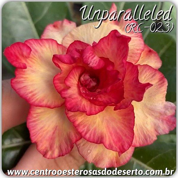 Rosa do Deserto Muda de Enxerto - Unparalleled - Flor Tripla