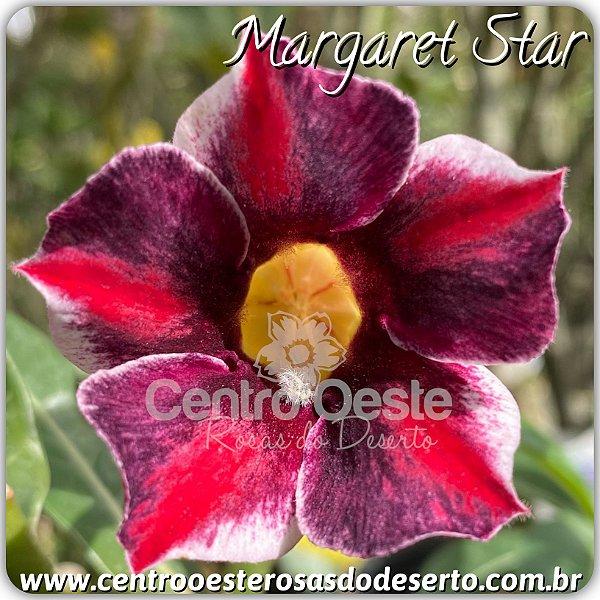 Rosa do Deserto Enxerto - Margaret Star