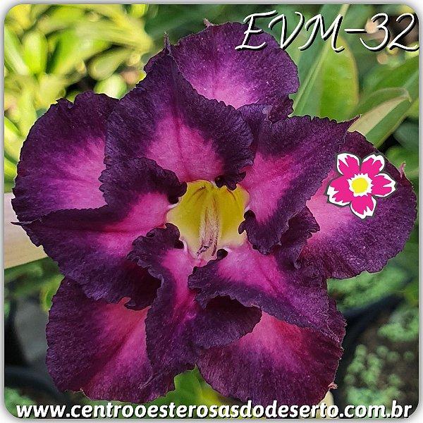 Rosa do Deserto Muda de Enxerto - EVM-032 - Flor Dobrada