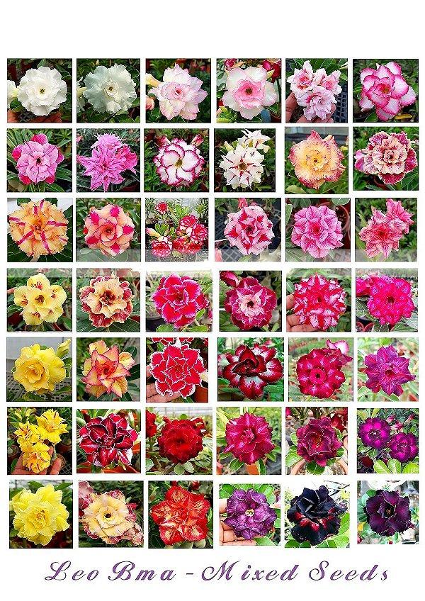 Sementes Multi-Petals Mixed - Coleção 2020 Leo BMA - Kit com 10 sementes