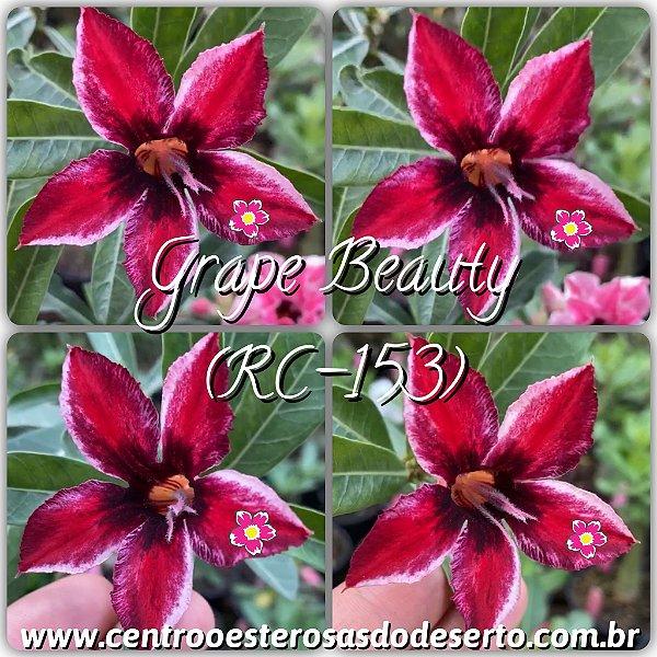 Rosa do Deserto Muda de Enxerto - Grape Beauty (RC-153) - Flor Simples