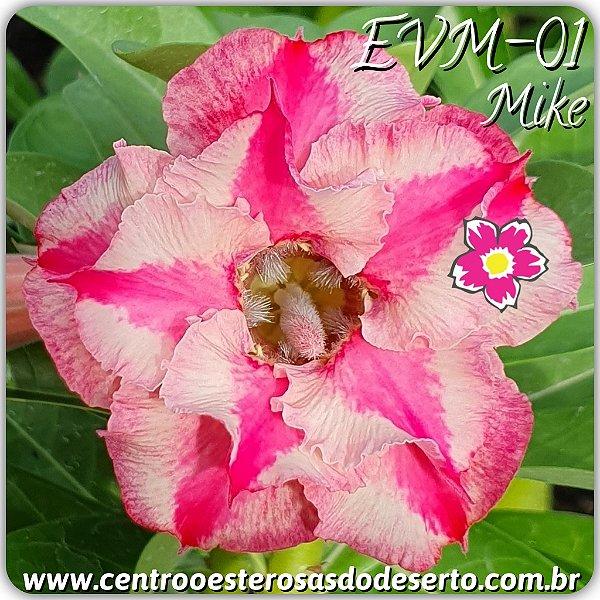 Rosa do Deserto Muda de Enxerto - EVM-001 - Mike - Flor Dobrada