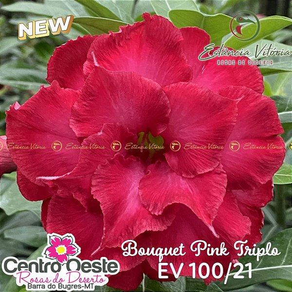 Rosa do Deserto Enxerto EV-100 Bouquet Pink Triplo