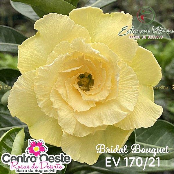 Rosa do Deserto Enxerto EV-170 Bridal Bouquet