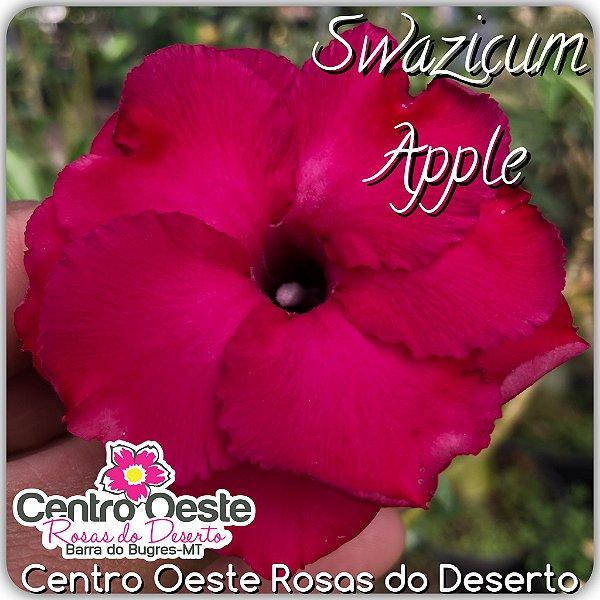 Rosa do Deserto Enxerto - Swazicum Apple