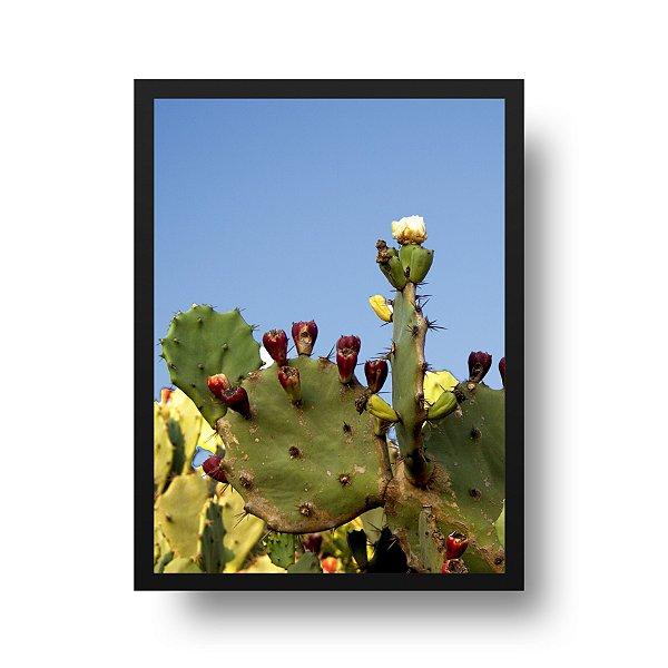 Quadro Fotografia Cactus
